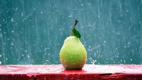 pera_sotto_la_pioggia