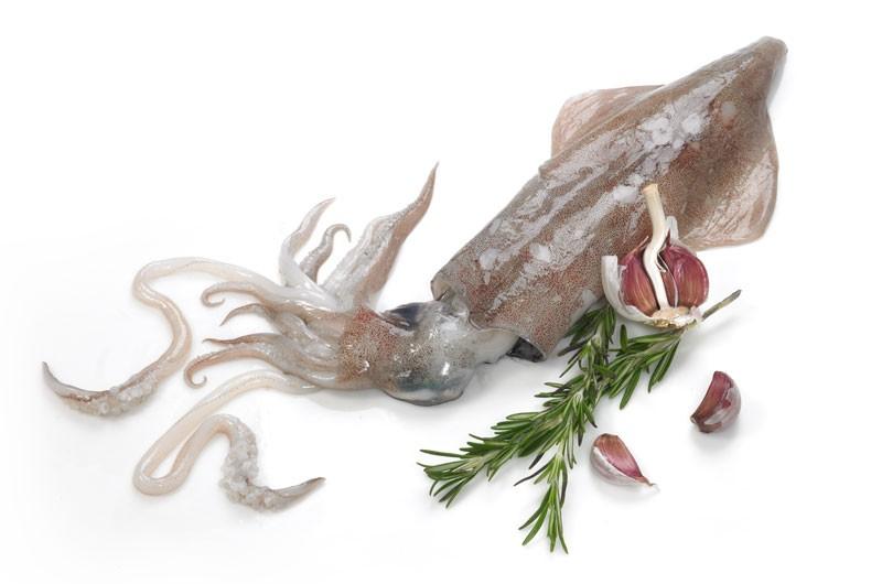 squid_1